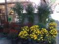 森田家の花たち    (27,11,1)